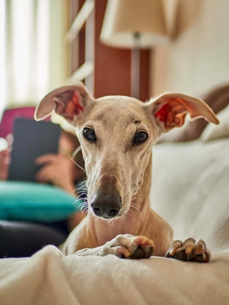 Got the Greyhound's attention