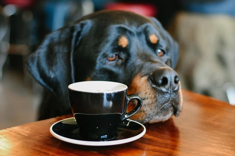 Rottweiler and Coffee