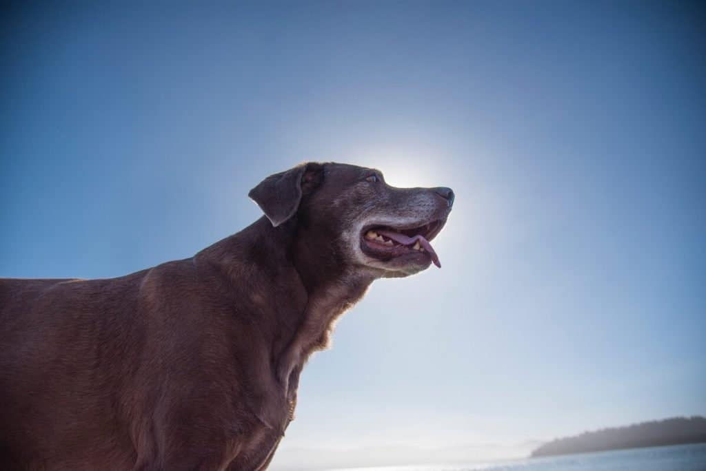 Dog in the sun by the water