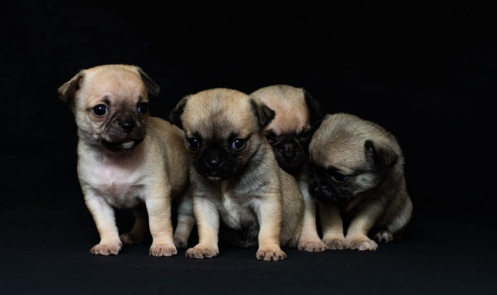 Puppy dogs sitting together in a dark room