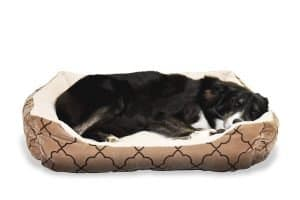 Dog in dog bed with bolsters on all sides