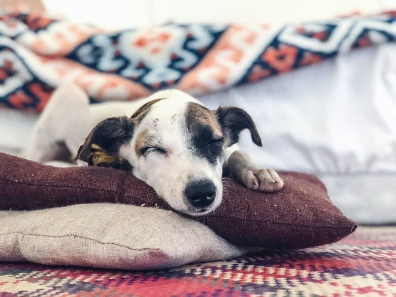 Dog napping on pillow