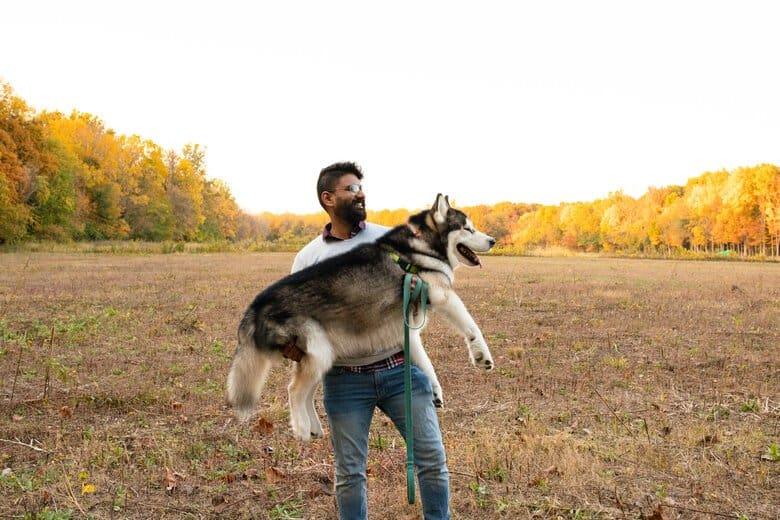 Husky gets a ride