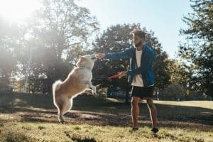 Dog jumps up on owner in the park on a sunny day