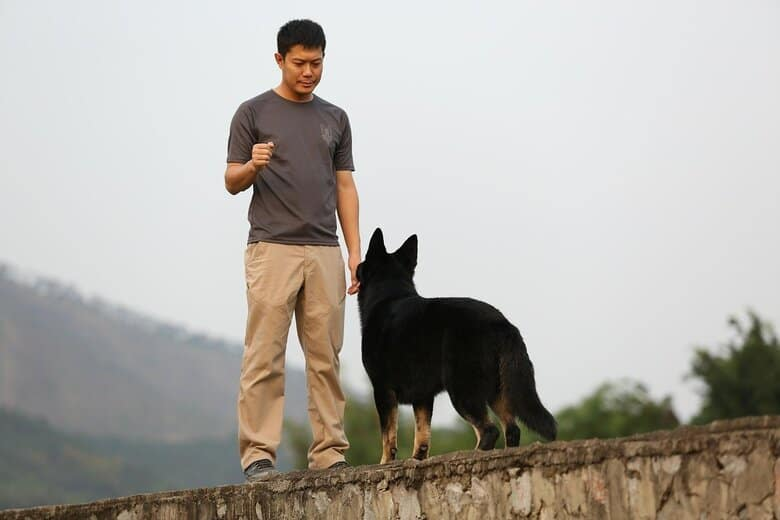 Dog being trained by owner on a mountain hike